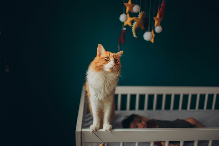 How To Keep Cat Out Of The Crib